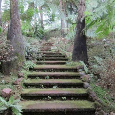 A stairway leading up a hill in a forest.